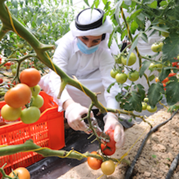 Khayr Qatarna improves food security and brings fresh, local food to supermarkets